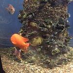 Central Coast Aquarium Bild