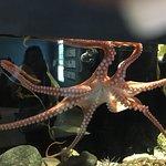 Bilde fra Central Coast Aquarium