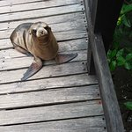 Just one pup of thousand of seal lions that lay everywhere, on the seats, stairs paths beaches a