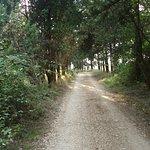 Forest Perithia Corfu