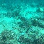 DiveOceanus Φωτογραφία