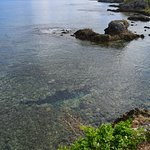 Rockwater's front yard: pristine and fully protected coral gardens