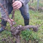 Portugal Farm Experience - Wine Experience