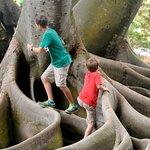 Play upon the banyan trees