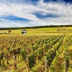 Wine tours to Burgundy wine country.