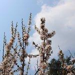하얗게 피어난 앵두꽃