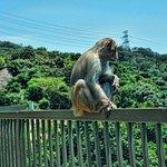 Monkey on a fence, Golden Hill, Shatin, Hong Kong
