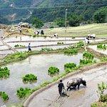 Muong Hoa Valley