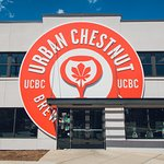 Urban Chestnut in the Grove