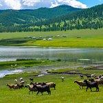 "Mongolian yurts, or ""gers"", in the beautiful rolling hills of Arkhangai, Mongolia."