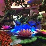 Bellagio Conservatory & Botanical Garden Fotografie