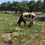 天然桥野生动物牧场照片