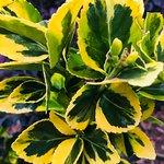Charleston garden hues