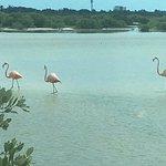 flamingo reserve