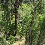 Soaring Tree Top Adventures照片