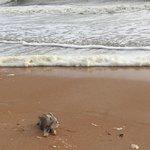 Buddy on the beach, stormy day