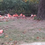 some of the flamingos