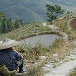Rice Terraces at Pingan