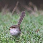 many smaller birds