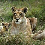 Cubs just out of their den