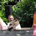 Bird show aka Vrije Vlucht Voorstelling
