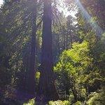 Muir Woods National Monument ภาพถ่าย