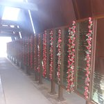 Name Boards & Poppies