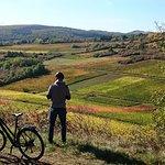 Tours guidés à vélos sur les vignes de la Côte de Beaune, Bourgogne.