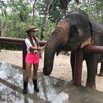 Phuket Elephant Sanctuary ภาพถ่าย