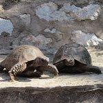 на территории водятся черепахи