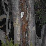 Barn owls visiting