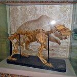 Foto de University of Florence Natural History Museum