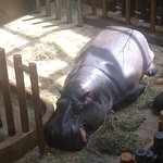 Zoo Ostrava Photo