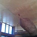 Fishing net and timber ceiling