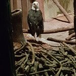 Johnny Morris' Wonders of Wildlife National Museum and Aquarium照片