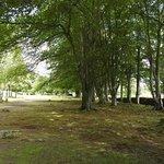 Parken där gravarna ligger