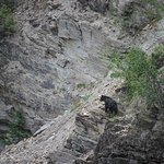 Black Bear checking out the rafts as they come by