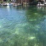 Fun 2 Dive Manatee Tours ภาพถ่าย