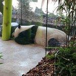 Zoo Berlin照片