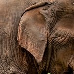 a great retirement home for elephants that have been mistreated in their lives
