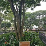 tree inside la plaza central