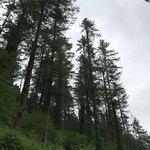 Cardinham Woods-bild