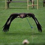 Haven Falconry Photo