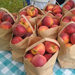 fresh ripe Georgia peaches