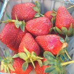 strawberries from Micah Hill Farm