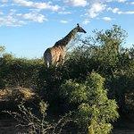 Vimos muitas girafas
