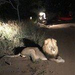 Leão resolveu descansar ao lado de nosso jipe