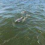 Fotografia de The Fun Boats Dolphin Cruises