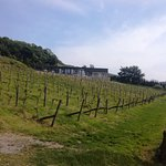 Holmfirth Vineyard Fotografie
