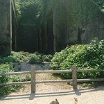 Okunoshima Island Φωτογραφία